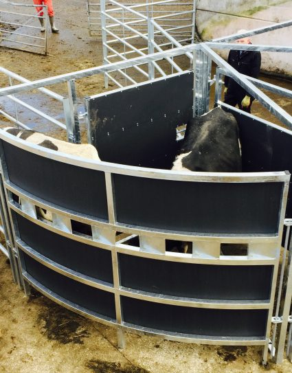 Portable Cattle Forcing Pen